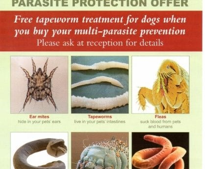 parasite-offers